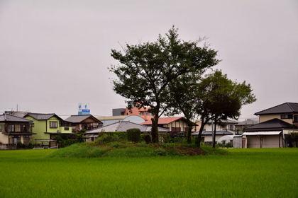 大類村第11号富士塚_003.jpg
