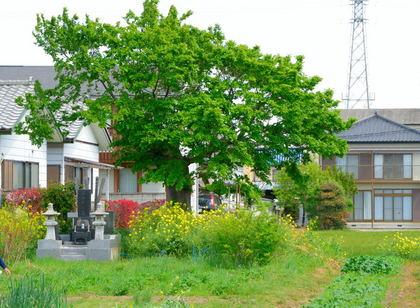 玉村町№238遺跡_004.jpg